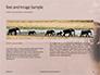 African Elephants Presentation slide 14