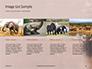 African Elephants Presentation slide 16