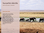 African Elephants Presentation slide 9