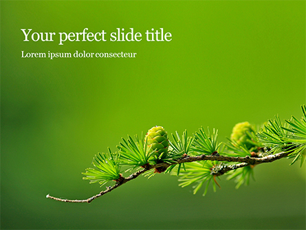 Branch of Larch Tree with Cones Presentation Presentation Template, Master Slide