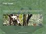Cute Panda Bear is Sitting on Tree Branch Presentation slide 10
