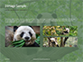 Cute Panda Bear is Sitting on Tree Branch Presentation slide 12