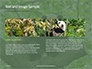 Cute Panda Bear is Sitting on Tree Branch Presentation slide 14