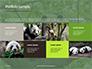 Cute Panda Bear is Sitting on Tree Branch Presentation slide 17