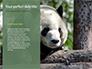Cute Panda Bear is Sitting on Tree Branch Presentation slide 9