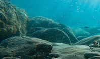 Sunbeams Underwater with Rocks on the Seabed Presentation Presentation Template