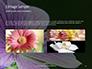 Violet Malva Flower Closeup Presentation slide 12