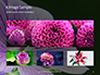 Violet Malva Flower Closeup Presentation slide 13