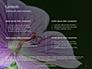 Violet Malva Flower Closeup Presentation slide 2
