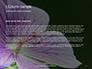 Violet Malva Flower Closeup Presentation slide 4