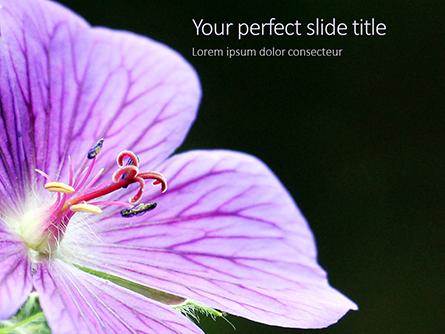 Violet Malva Flower Closeup Presentation Presentation Template, Master Slide
