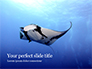 Manta Ray Presentation slide 1
