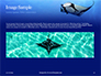Manta Ray Presentation slide 10