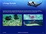 Manta Ray Presentation slide 12