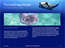 Manta Ray Presentation slide 14