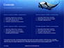Manta Ray Presentation slide 2
