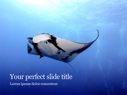 Manta Ray Presentation Presentation Template, Master Slide