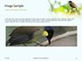 The Blue-Crowned Laughingthrush Among Tree Leaves Presentation slide 10