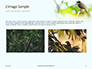The Blue-Crowned Laughingthrush Among Tree Leaves Presentation slide 11
