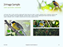 The Blue-Crowned Laughingthrush Among Tree Leaves Presentation slide 12