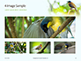 The Blue-Crowned Laughingthrush Among Tree Leaves Presentation slide 13