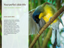 The Blue-Crowned Laughingthrush Among Tree Leaves Presentation slide 9