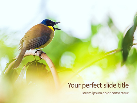 The Blue-Crowned Laughingthrush Among Tree Leaves Presentation Presentation Template, Master Slide