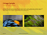 Colorful Background of Parrot Bird Feathers Presentation slide 11