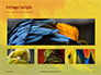 Colorful Background of Parrot Bird Feathers Presentation slide 13