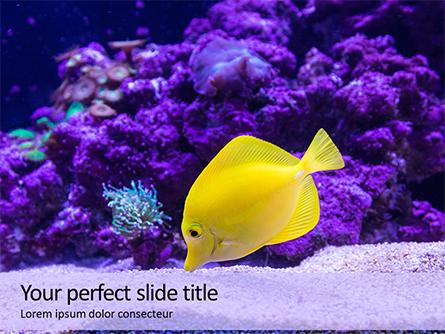 Yellow Tang Fish in Aquarium Presentation Presentation Template, Master Slide