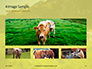 A Glorious Cow on a Green Field Presentation slide 13