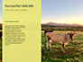 A Glorious Cow on a Green Field Presentation slide 9