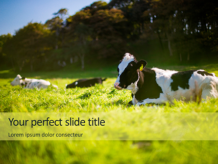 A Glorious Cow on a Green Field Presentation Presentation Template, Master Slide