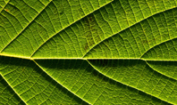 Fresh Green Leaf Texture Presentaiton Presentation Template