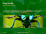 Firebug Pyrrhocoris Apterus on Green Twig Presentation slide 10