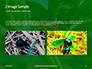 Firebug Pyrrhocoris Apterus on Green Twig Presentation slide 11