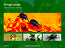 Firebug Pyrrhocoris Apterus on Green Twig Presentation slide 13