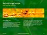 Firebug Pyrrhocoris Apterus on Green Twig Presentation slide 14