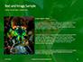 Firebug Pyrrhocoris Apterus on Green Twig Presentation slide 15