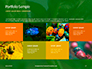 Firebug Pyrrhocoris Apterus on Green Twig Presentation slide 17