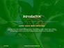 Firebug Pyrrhocoris Apterus on Green Twig Presentation slide 3