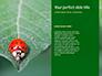 Firebug Pyrrhocoris Apterus on Green Twig Presentation slide 9