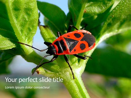 Firebug Pyrrhocoris Apterus on Green Twig Presentation Presentation Template, Master Slide