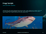 Hammerhead Shark in Deep Water Presentation slide 10