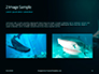 Hammerhead Shark in Deep Water Presentation slide 11