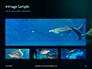 Hammerhead Shark in Deep Water Presentation slide 13