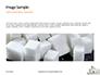 Lump Sugar Cubes Presentation slide 10