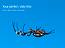Big Garden Spider on Cobweb Presentation slide 1
