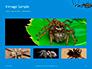 Big Garden Spider on Cobweb Presentation slide 13