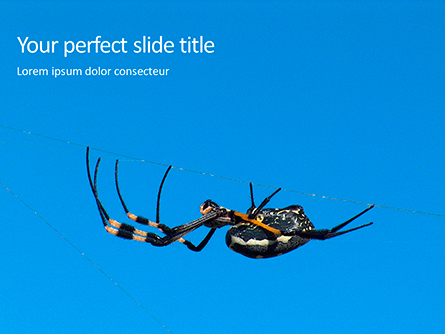 Big Garden Spider on Cobweb Presentation Presentation Template, Master Slide